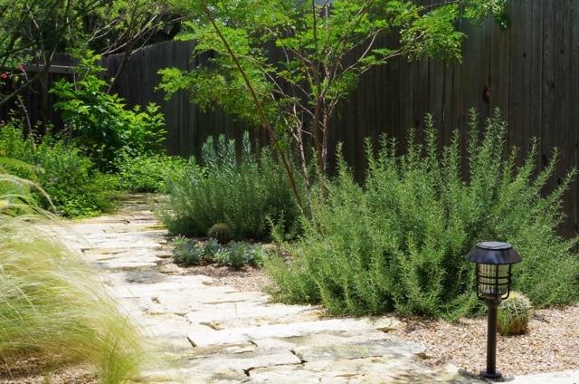 Austin Native Plant Garden with Stone Path