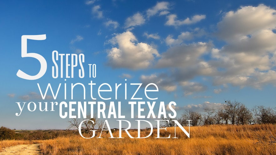 5 Steps to Winterize your Central Texas Garden
