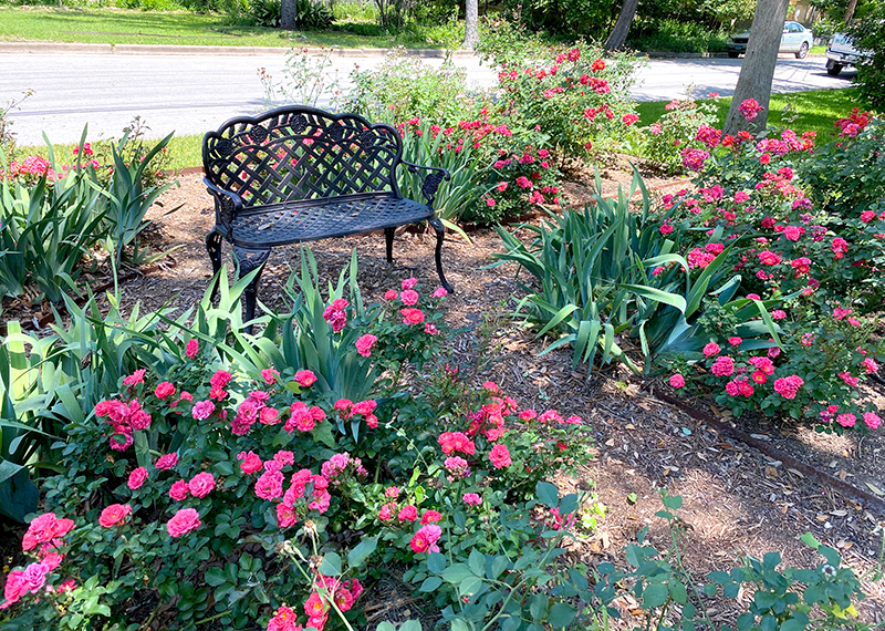 Rose Garden with Bench