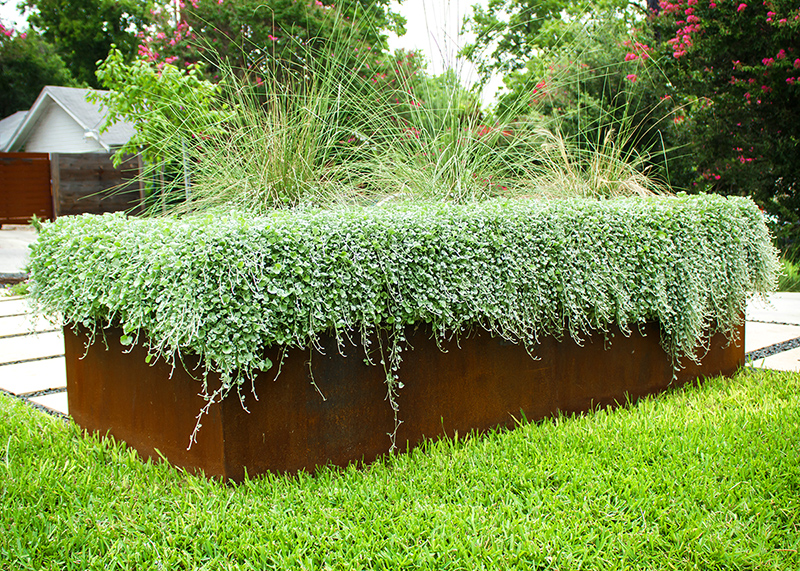Steel Planter with Native Plants